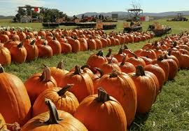 Pumpkin Picking In Ct by Don U0027t Miss These 14 Pumpkin Patches In Virginia This Fall