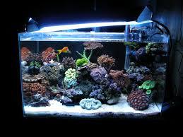 aquarium nano eau de mer le 45 litres de jonathan gekiere