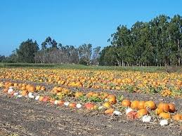 Pumpkin Patch Rides by Eleven Adorable Spots To Go Pumpkin Picking In The Bay Area
