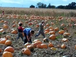 Pumpkin Patch Fort Collins by 10 Best Pumpkin Patches In Colorado