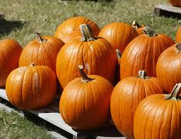 Pumpkin Patches In Oklahoma by Pumpkin Patch A Fall Tradition In Norman News Ok
