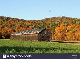 An Autumn View Of A Tobacco Barn, Sunderland, Massachusetts Stock ... Catalogers Corner Barns Field Trip South Tobacco And Woodwork Wood Shop Barn Virginia Tobacco Barns 1940s Google Search Memories Shadowy This Barn Is Visible From Us Route Flickr Project 365332 A Teaser Emily Carter Mitchell Carolyns Travel Stories Recumbent Conspiracy Theorist Ride B O Trail Asheville Shopping Holly Mathis Interiors Historic Houses Pinterest Old Outdoor Places Spaces Greensboro Daily Photo Log Type Typical For North Carolina Group
