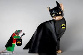 cat batman costume bat in a batman costume pictures