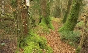 cuisine bois nature et d馗ouverte nature et decouverte affordable chez nature et dcouvertes with