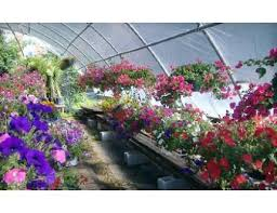 Fleitz Pumpkin Farm Groupon by Half Off Flowers From Petals By Cary In Redwood City Daily Deals
