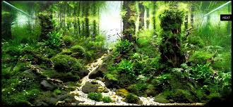 Idée Aquarium | Aquascapes | Pinterest | Aquariums, Fish Tanks And ... My Life Story Aquascape Gallery Aquascapes Pinterest Aquascaping Live 2016 Small Planted Tanks The Surreal Submarine World Of Amuse Category Archives Professional Tank Enchanted Forest By Tommy Vestlie Aquarium Design Contest Awards 100 Ideas Aquariums Fish Tanks And Vivarium Avatar Fish Tank Google Search Design Aquascape Ada Aquascaping Contest Homedesignpicturewin Award Wning Amenagementlegocom Legendary Aquarist Takashi Amano Architecture