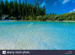 100 Le Pines Isle Of New Caledonia Stock Photos Isle Of New