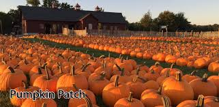 Pumpkin Patch Western Massachusetts by Tougas Family Farm U2013 Apple Picking And Pumpkin Picking And Family