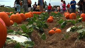 Pumpkin Picking Maryland by Bedners Farm Fresh Market Youtube