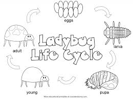 10 Pics Of Sunflower Life Cycle Coloring Page