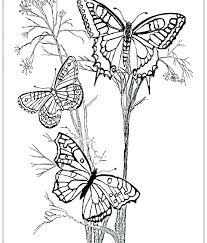 Coloring Page Butterfly Monarch