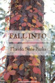 Best Pumpkin Patch Tallahassee by 115 Best Fall In Florida State Parks Images On Pinterest Autumn
