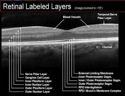 Layers Of The Retina Oct