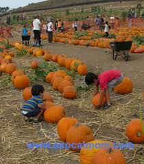 Underwood Pumpkin Patch Moorpark by Pumpkin Farms In Los Angeles A Socal Mom