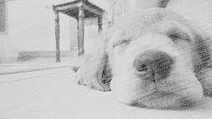 comment empecher chien de monter sur le canapé comment emp ecirc cher mon chien de monter sur le canap eacute