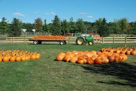 Pumpkin Picking Richmond by Pumpkin Patch Pumpkin Farm Woodstock Illinois Near 60098