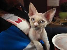 cats and yogurt yogurt cat