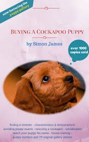 Do F2 Cockapoos Shed by Review If A Cockapoo Right For You 53 Useful Facts Cockapoo For