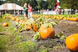 Boone Hall Pumpkin Patch And Corn Maze by October 2014 Hidden Charleston U2013 Belmond Charleston Place Blog