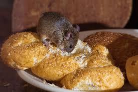 souris cuisine souris dans la cuisine image stock image du texture 23285131