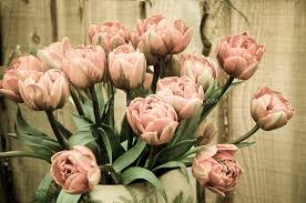 faded toned tulips arranged in a vase plant flower stock