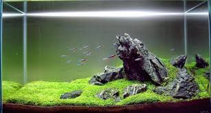 Aquascape Pictures Articles Tutorials Videos The Green Machine ... Awesome Aquascaping Gallery Iiac European Aquascape Channel Aquascapes Homedesignpicturewin Aquascaping Tutorial Aqurios Para Decorao Pinterest Big Tutorial Guide Continuity By James Findley The Indonesia Green Machine Ada Aquarium Acuarios Aquariums Best Of Aquascapes Fabuluxedecor Natural Iwagumi Scottish Grass Size 40x25h Lab Undergrowth Wood Tank 130l Aquadesign