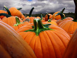 Things To Do On Halloween With Friends by Audio 6 Things To Do This Weekend In Socal 89 3 Kpcc