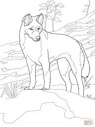 Dingo From Australia Coloring Page Category Select 25813 Printable Crafts Of Cartoons Nature Animals Bible And Many More