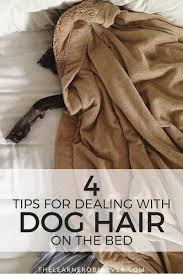 Dogs That Shed The Least Hair by The Learner Observer Clean Comforter And Pets Is It Possible To