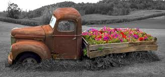 Old Truck And Flowerbed