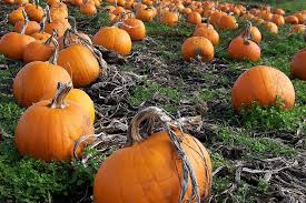 Free Pumpkin Patch Charleston Sc by Boone Hall Fright Nights Canceled For 2016 The Battery