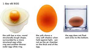 bad eggs float or sink farm fresh eggs and how to tell when they re not honest fare