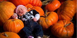 Petaluma Pumpkin Patch Corn Maze Map by 15 Pumpkin Patches To Get You In The Spirit Upout Blog