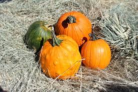 Pumpkin Stages Of Growth Worksheet by Pumpkins Activities For Kindergarten Simply Kinder