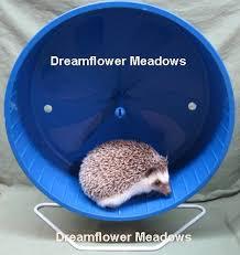 Ceramic Heat Lamp For Hedgehog by Hedgehog Shopping List Dreamflower Meadows