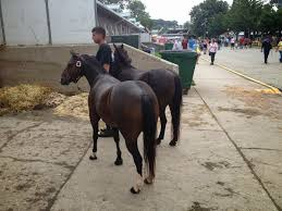 Amish Horses: September 2014 Amish Horses April 2016 For Sale Featured Listings Kalona Homes For Property Search In Single Familyacreage Sale Iowa 20173679 Tours Chamber September 2014 Ia Horse Auction Pictures Of Amana Colonies Day Trip To Girl On The Go