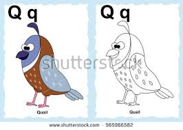 Alphabet Coloring Book Page With Outline Clip Art To Color Letter Q Cartoon Quail