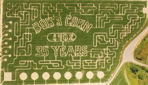 Pumpkin Picking Nj Corn Maze by 100 Best 10 Pumpkin Patch Birthday Pumpkin Patches Fall