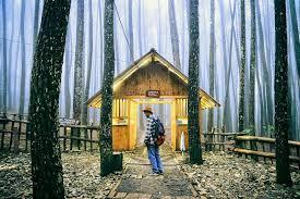 Yaitu Hutan Pinus Mangunan Dlingo Begitulah Bagian Dari Di Kawasan RPH Resort Pengelolaan Yang Ditumbuhi Tanaman Jenis