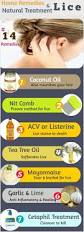Types Of Christmas Trees Oil And Gas by Best 25 Lice Nits Ideas On Pinterest Nit Treatment Lice