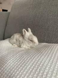 kaninchen baby frühkastriert