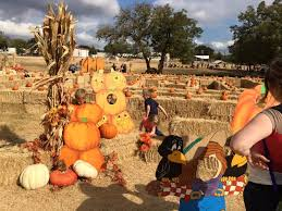 Pumpkin Patch Marble Falls by 8 Top Pumpkin Patches In Texas Tripstodiscover Com