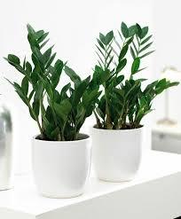 mit diesen pflanzen fürs bad eine tropische wohlfühloase