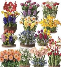 six months of bulb gardens in live plants and bulbs flower