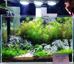 Guide To Aquascaping Cookie Led Lighting System Planted Appartment ... Planted Tank Contest Aquarium Design Aquascape Awards How To Create Your First Aquascaping Love Pin By Marius Steenblock On Pinterest The Month September 2008 Pinheiro Manso Creating Nature Part 1 Inspiration A Beginners Guide To Aquaec Tropical Fish Style The Complete Brief Progressive Art Of 2013 Xl Pt2 Youtube Aquadesign Dutch Sytle Aquascape Best Images On Appartment Iwagumi Der Der Firma Dennerle Ist Da Aqua Nano