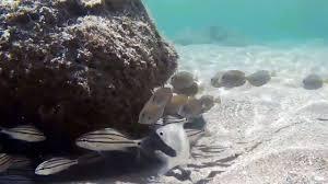 Bathtub Beach Stuart Fl Beach Cam by Snorkeling Bathtub Reef Beach Stuart Florida Underwater Video