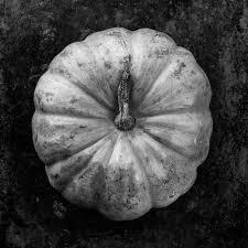 Pumpkin Patch Raleigh Nc 2014 by Blog U2014 Miller Taylor