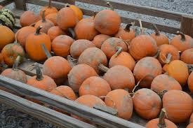 Pumpkin Patches Cincinnati Ohio Area by Our Delicious Life October 2014
