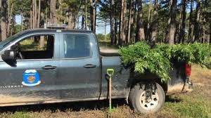 100 Game Warden Truck Oklahoma S Find Marijuana Grow Site On Wildlife