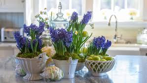 how to grow hyacinths indoors hyacinth bulbs indoors mygen